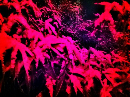 C360_2012-01-16_00-12-04