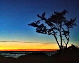 Shore pine against a winter sunset, Yachats